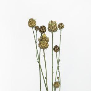 Сухоцвет Василек, вес грамм