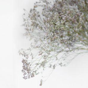 Сухоцвет Кермек фиолетовый