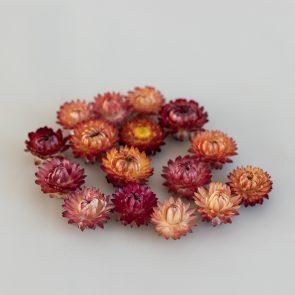 Сухоцвет Гелик, цвет красно-оранжевый