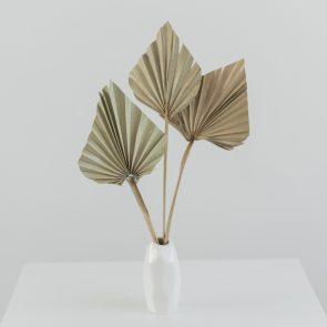 Сухоцвет Копье Пальмы