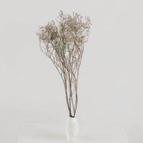 Сухоцвет Кермек белый