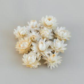 Сухоцвет Гелик, цвет желто-белый
